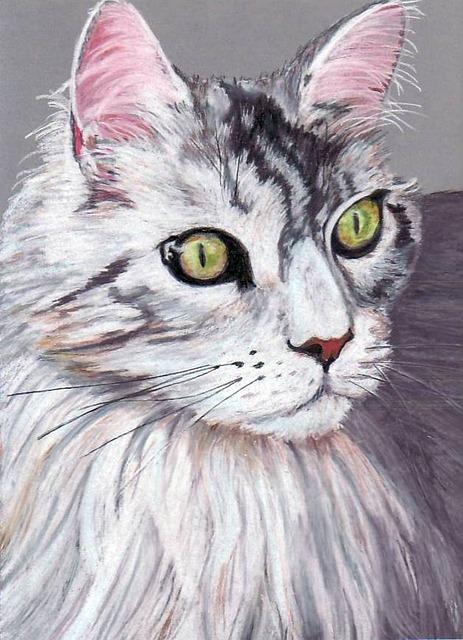 白い毛並みの猫