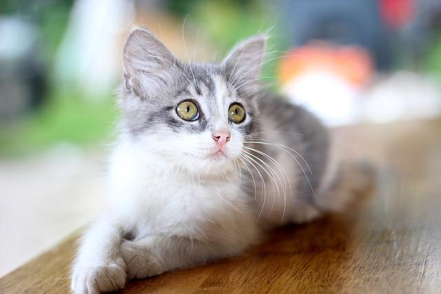 黄色い目をした猫