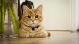 にゃんとかわいい!猫の読書雑貨【しおり】【ブックカバー】【本立て】