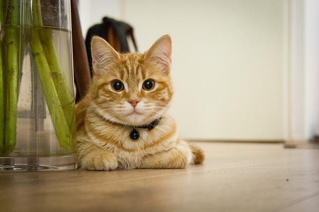 とてもかわいい猫