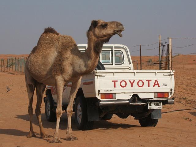トヨタのトラックとラクダ