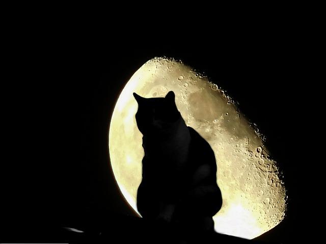 月光に照らされた猫