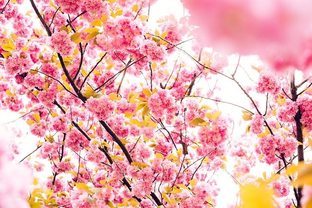 【800字書評】西加奈子『さくら』|春が終わると散る花の名は