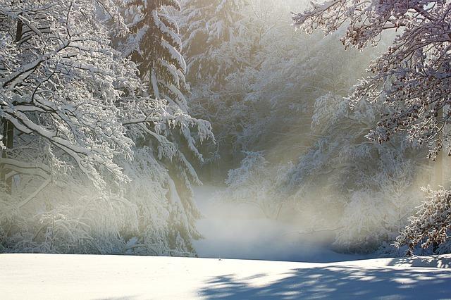 霧のかかった冬の森林