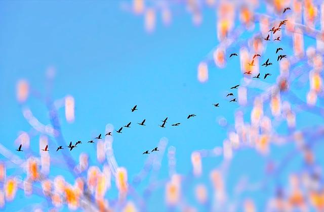 桃色の花と飛ぶ鳥の群れ