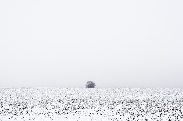 寂しい冬の光景