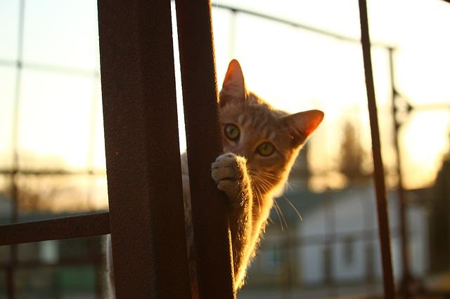 朝日と柱の影の猫