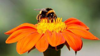 蜂蜜と天才|恩田陸『蜜蜂と遠雷』あらすじと感想