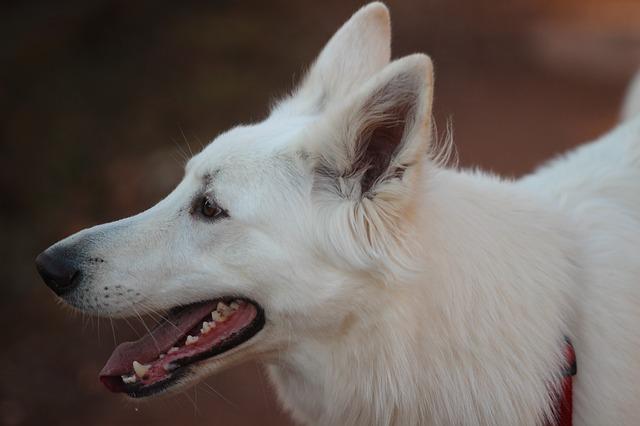 『霧のなかの白い犬』読書感想文|白いシェパードと当たり前
