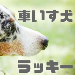 『車いす犬ラッキー』読書感想文|命の刹那連鎖